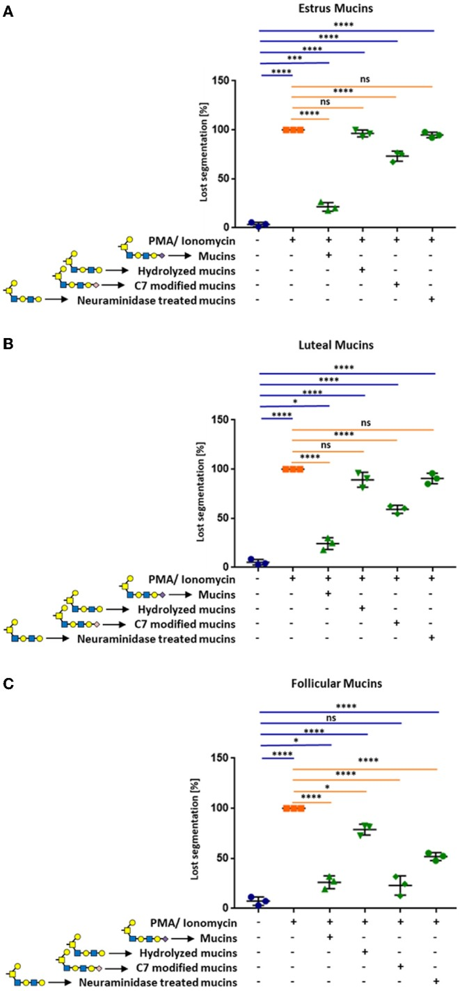 Cervical mucins inhibit the release of NETs induced by 1.5 μM PMA in combination with 3 μM ionomycin by sialic acid on its surface. The experiments were performed with mucins from (A) estrus, (B) luteal, and (C) follicular samples. Untreated mucins, as well as hydrolyzed, C7 modified and neuraminidase treated mucins were applied to stimulated neutrophils in a final concentration of 20 μg/μL. The percentage of activated cells was calculated by counting the segmented nuclei as well as the total cell number. Mean values and standard deviations are displayed in the diagrams ( n = 3 different animals). Paired ANOVA and a multiple-comparison Tukey test were applied. Statistically significant differences are given: ns, not significant, * p ≤ 0.05; *** p ≤ 0.001; **** p ≤ 0.0001. Glycan illustration: Yellow square: N-acetylgalactosamine, Blue square: N-acetylglucosamine, Yellow circle: Galactose, Purple diamond: Sialic acid, rose diamond: C7 modified sialic acid.
