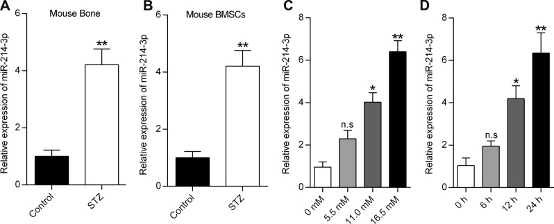 High glucose induces miR-214-3p expression in BMSCs. a qRT-PCR analysis of miR-214-3p levels in bone specimens from mice treated with or without STZ ( n = 3). b qRT-PCR analysis of miR-214-3p levels in BMSCs extracted from the mice treated with or without STZ ( n = 3). c qRT-PCR analysis of miR-214-3p levels in BMSCs treated with glucose at different concentrations for 24 h ( n = 3). d qRT-PCR analysis of miR-214-3p expression in BMSCs at the indicated time points after treatment with glucose at 16.5 mM ( n = 3). All data are expressed as mean ± SEM, * p