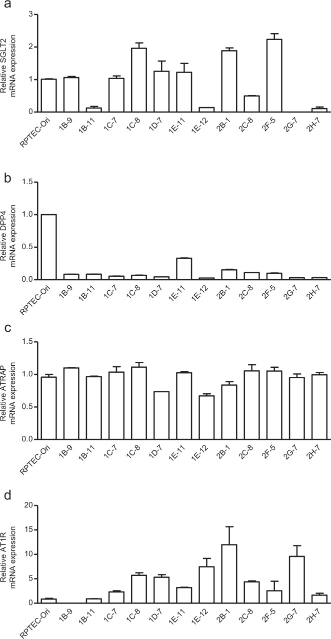 mRNA expression of the proximal tubule markers, AT1R and ATRAP , in clonal immortalised cells. ( a–d ) The relative mRNA levels of SGLT2 , DPP4 , ATRAP and AT1R in 12 clonal immortalized cell (ciRPTEC) clones were determined by RT-qPCR, normalized to 18S ribosomal RNA. The mRNA levels of the original RPTEC (RPTEC-Ori) were set to 1. Data were obtained with three biologically independent experiments. Values represent the means ± standard error.
