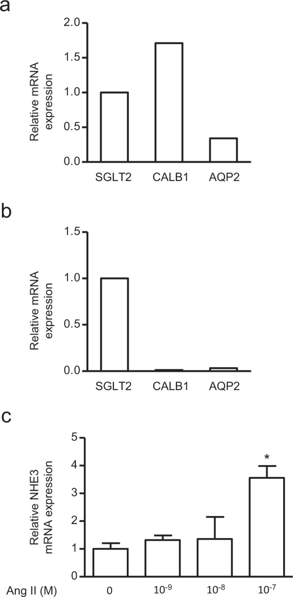Comparison of mRNA expression levels of distal and proximal tubule markers in the ciRPTEC 2B-1 cell line, and reactivity of NHE3 in this cell line to angiotensin II (Ang II) treatment. ( a,b ) The relative mRNA levels of CALB1 and AQP2 in the original RPTEC (RPTEC-Ori) cell line and the clonal immortalized cell line 2B1 (ciRPTEC 2B1) were determined by RT-qPCR, normalized to 18S ribosomal RNA. mRNA levels of SGLT2 were set to 1. ( c ) The relative mRNA levels of NHE3 in ciRPTEC 2B1 after 24 hours of treatment with a range of Ang II concentrations were determined by RT-qPCR, normalized to 18S ribosomal RNA. mRNA levels obtained without Ang II (concentration 0 M) were set to 1. Data were obtained with three biologically independent experiments. Values represent the means ± standard error. *p