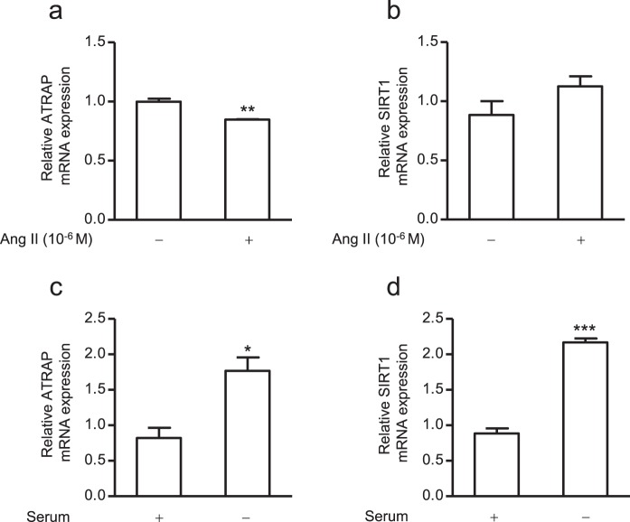 mRNA expression levels of ATRAP and SIRT1 in ciRPTEC in response to angiotensin II (Ang II) treatment or serum withdrawal. The ciRPTEC were treated with 10 −6 M of Ang II (+) for 24 hours ( a,b ) or serum withdrawal (−) for 24 hours ( c,d ). The relative mRNA levels of ATRAP and SIRT1 in the ciRPTEC were determined by RT-qPCR, normalized to 18 S ribosomal <t>RNA.</t> mRNA levels in the absence of Ang II treatment (−; for a,b ) or presence of serum (+; for c,d ) were set to 1. All data were obtained with <t>three</t> biologically independent experiments. Values represent the means ± standard error. ( a ) **p