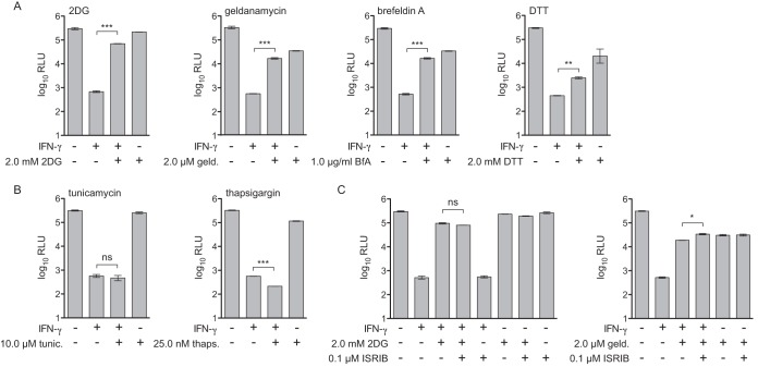 Differential effect of UPR stress stimuli on rescue of L. pneumophila replication in IFN-γ-stimulated macrophages. (A) Log 10 RLU from LP02 Δ flaA Δ uhpC lux L. pneumophila from infected wild-type C57BL/6 BMMs stimulated for 48 h postinfection with 6.0 ng/ml IFN-γ, 2.0 mM 2DG, 2.0 μM geldanamycin (geld.), 1.0 μg/ml brefeldin A (BfA), and 2.0 mM dithiothreitol (DTT) as indicated. (B) Log 10 RLU from LP02 Δ flaA Δ uhpC lux L. pneumophila from infected wild-type C57BL/6 BMMs stimulated for 48 h postinfection with 6.0 ng/ml IFN-γ, 10.0 μM tunicamycin (tunic.), and 25.0 nM thapsigargin (thaps.) as indicated. (C) Log 10 RLU from LP02 Δ flaA Δ uhpC lux L. pneumophila from infected wild-type C57BL/6 BMMs stimulated for 48 h postinfection with 6.0 ng/ml IFN-γ, 2.0 mM 2DG, 2.0 μM geldanamycin, and 0.1 μM ISRIB as indicated. ***, P