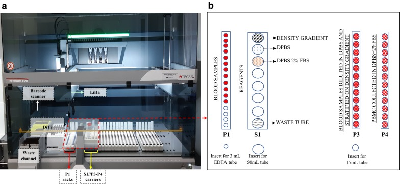 Workstation setup. a Liquid handling workstation. b Tube rack workstation setup. The P1 rack contains centrifuged PB (Peripheral Blood) in BD <t>vacutainer</t> <t>EDTA</t> tubes. The S1 rack holds 50 mL conical tubes containing density gradient media, DPBS, DPBS + 2% FBS and an empty tube for waste. P3 contains the 15 mL conical tubes where the DPBS-diluted blood will be stratified onto 3 mL of the previously dispensed density gradient media. After centrifugation, the 15 mL conical tubes containing the stratified PB will be relocated to rack P3, and PBMCs will be transferred and diluted in the 15 mL conical tubes located in rack P4 containing 5 mL of DPBS + 2% FBS solution. DiTi disposable tips; LiHa liquid handling arms