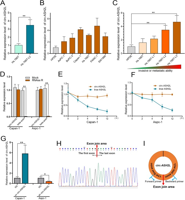 a Relative circ-ASH2L expressions of Hs 766 T and Hs 766 T-L2 were measured by qRT-PCR. b Relative circ-ASH2L expressions of HPDE (the normal pancreatic cell line) and the indicated PDAC cells were measured by qRT-PCR. c Relative circ-ASH2L expressions of HPDE (the normal pancreatic cell line) and the indicated PDAC cells were measured by qRT-PCR. d qRT-PCR analysis of circ-ASH2L or β-actin after treatment of RNase R in Capan-1 and Aspc-1 cells. e qRT-PCR analysis of circ-ASH2L and β-actin after treatment of Actinomycin D at the indicated time points in Capan-1 cells. f qRT-PCR analysis of circ-ASH2L and β-actin after treatment of Actinomycin D at the indicated time points in Aspc-1 cells. g Relative expressions of circ-ASH2L in indicate treated Capan-1 and Aspc-1 cells was measured by qRT-PCR. h The PCR products of Capan-1 cells were confirmed by Sanger sequencing to show the back-splice junction. i Schematic outlining the details of circ-ASH2L and its primer-designing details