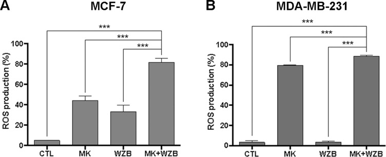 MK-2206 and WZB117 synergistically induce ROS in breast cancer cells. (A) Quantitative data of MCF-7 cells with ROS production. Cells were treated with 3 µM MK-2206 and 30 µM WZB117 either alone or in combination along with 10 µM DCFH-DA for 30 min. (B) Quantitative data of MDA-MB-231 cells with ROS production. Cells were treated with 6 µM MK-2206 and 30 µM WZB117 either alone or in combination along with 10 µM DCFH-DA for 30 min. DCFH-DA is non-fluorescent and is hydrolyzed by intracellular esterases to 2,7-dichlorodihydrofluorescein, which is then oxidized to fluorescent 2,7-dichlorofluorescein (DCF) by ROS. DCF fluorescence was detected by flow cytometric analysis and 10,000 cells were counted. The percentage of cells with ROS production was indicated. Data are presented as the mean ± SEM of at least three independent experiments. *** P
