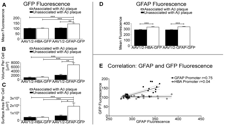 GFAP promoter results in greater GFP fluorescence intensity, volume, and surface area of astrocytes near Aβ plaque. (A) Quantification of GFP fluorescence per unit volume is significantly increased in GFAP and GFP-positive cells near Aβ plaque in the rAAV1/2-GFAP-GFP group, compared to GFAP and GFP-positive cells unassociated with Aβ plaque (**p