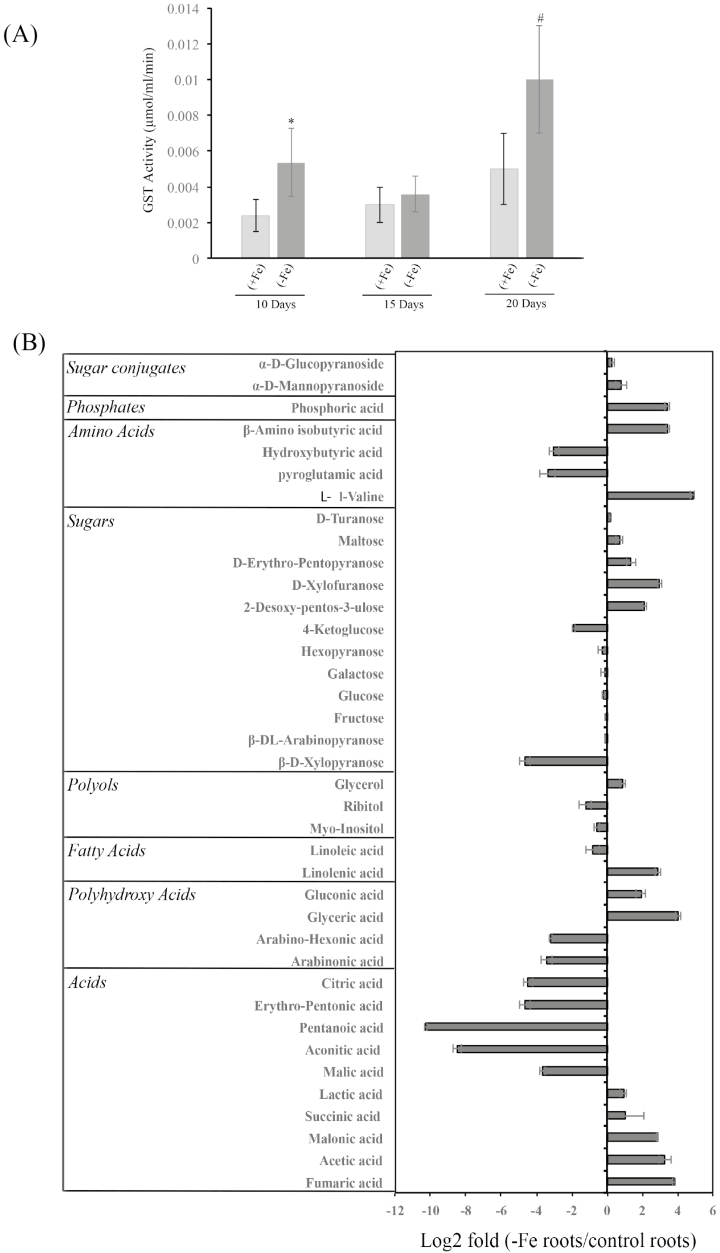Measurement of GST activity and metabolite profiling of wheat roots subjected to Fe starvation. (A) Glutathione S -transferase activity of wheat roots under Fe starvation (–Fe) and control (+Fe) conditions. (B) Metabolite profiling of amino acids, sugars, polyols, organic acids, and related compounds. Change in abundance of significant ( P