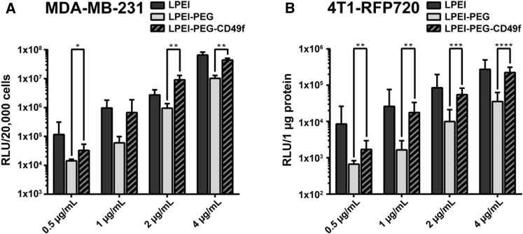 Transfection Efficiency of Polyplexes on MDA-MB-231 and 4T1-iRFP720 Breast Cancer Cells (A and B) MDA-MB-231 (A) and 4T1-iRFP720 cells (B) were seeded in 96-well plates and transfected with pCMV-Gluc polyplexes at indicated pDNA concentrations. Transfections were conducted in basal cell culture medium for 4 h followed by exchanging the supernatant with fetal calf serum (FCS)-supplemented medium. Gluc was quantified in the supernatant 24 h after transfection, and RLU values were normalized on total count of live cells (MDA-MB-231) or on protein content (4T1-iRFP720). Mean values are from two independent experiments with n = 3/experiment + SD. *p ≤ 0.05, **p ≤ 0.01, ***p ≤ 0.001, ****p ≤ 0.0001 (Mann-Whitney).