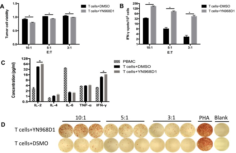 ( A ) The cytotoxicity of T cells was evaluated by the LDH assay at different ( E ) T ratios. ( C ) Human Th1/Th2 Cytokine Kit determined the expression level of <t>IL-2,</t> IL-4, IL-6, TNF-α, and IFN-γ of DMSO or YN968D1-treated T cells. ( B, D ) The frequency of IFN-γ-producing T cells after co-incubation with gastric cancer cell MKN-45 for 18 hrs was evaluated by IFN-γ ELISPOT kit (Dakewei, China). T cells and MKN-45 were co-incubated at different E: T ratios (10:1, 5:1, 3:1). * means P value