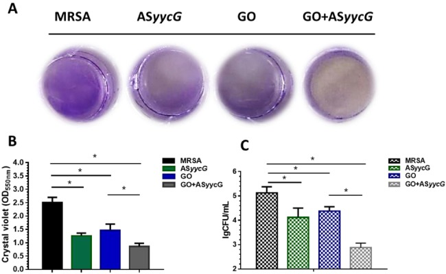 GO-PEI-AS yycG suppressed bacterial growth and biofilm formation in MRSA biofilms. (A) Crystal violet staining for the MRSA strains; (B) Biomass was quantified by crystal violet staining; Optical densities at 600 nm were measured (n=10, * P