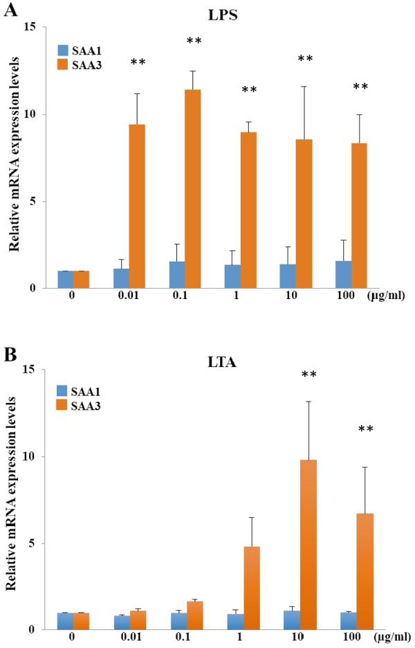 Comparison of mRNA expression induced by lipopolysaccharide (LPS) and lipoteichoic acid (LTA) in MLE-15 cells. MLE-15 cells were treated with 0–100 µ g/m l LPS (A) or LTA (B) at 37°C for 2 hr. MLE-15 cells treated with phosphate-buffered saline (PBS) served as a control. mRNA expression of SAA1/2 and SAA3 was normalized to glyceraldehyde-3-phosphate dehydrogenase ( GAPDH ) mRNA expression and compared with that in control cells assumed to have 0 µ g/m l expression. Data are the mean plus standard deviation from three independent experiments. ** P