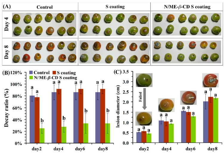 The selected appearance ( A ), decay ratio ( B ), and lesion diameter ( C ) of tomatoes from the control group, waxy corn starch-based coating (S coating) group, and <t>natamycin/ME-</t> β -CD incorporated waxy corn starch-based coating (N/ME- β -CD S coating) group after incubated with Botrytis cinerea at different storage times (days). The different lower-case letters at each time point indicate a significant difference at p