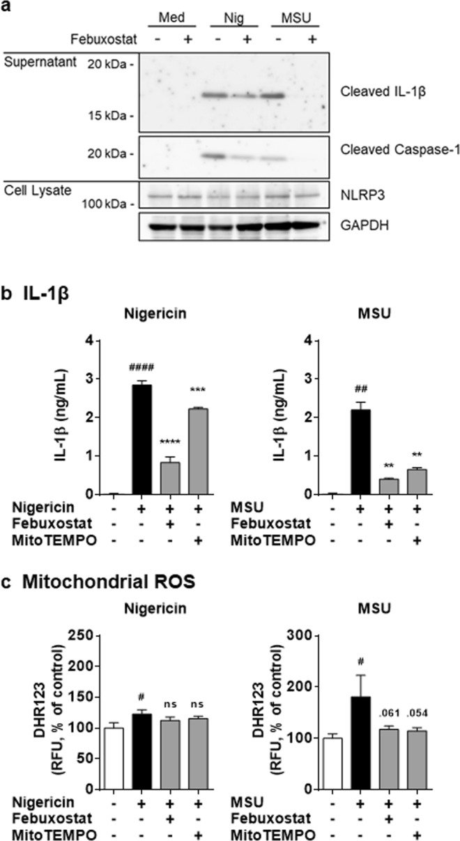 Febuxostat inhibits IL-1β secretion in mitochondrial ROS-independent and -dependent manners. ( a ) Primed BMDMs were pretreated 30 min with vehicle or febuxostat, and then stimulated 2 h with nigericin or MSU. Supernatant and cell lysate were used for immunoblotting. Data are representative of two independent experiments in which the same data were obtained. ( b ) Primed BMDMs were pretreated 30 min with vehicle, febuxostat or MitoTEMPO, and then stimulated 2 h with nigericin or MSU. IL-1β in the supernatant was analysed by ELISA. ( c ) Primed BMDMs were pretreated 30 min with vehicle, febuxostat or MitoTEMPO, and then stimulated 90 min with nigericin or MSU. After stimulation, cells were loaded with DHR123. Data are representative of three independent experiments performed in triplicate and shown as mean ± SD. # p
