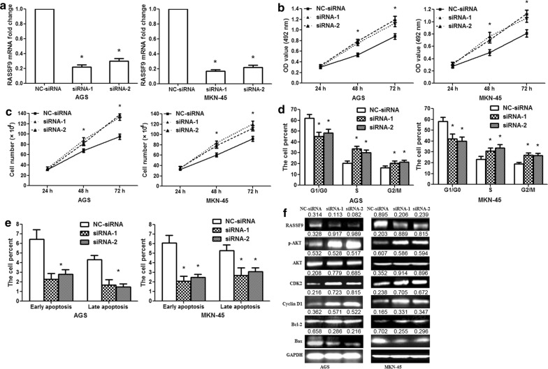 RASSF9 siRNAs promote the proliferation of human GC cells. a The results showed the knockdown efficiency of RASSF9 siRNA-1/2 in AGS/MKN-45 cells at 24 h after transfection. b MTT assay showed that RASSF9 siRNA-1/2 increased the activity of AGS/MKN-45 cells at 48 and 72 h. c Cell counting assay revealed that RASSF9 siRNA-1/2 promoted AGS/MKN-45 cell proliferation at 48 and 72 h. d Flow cytometric analysis showed the percentage of AGS/MKN-45 cells in the G0/G1, S and G2/M phases. The proportion of G0/G1 phase cells decreased after RASSF9 siRNA-1/2 transfection, and the proportion of S and G2/M phase cells increased. e The data showed the percentage of early and late apoptosis after RASSF9 siRNA-1/2 transfection. f RASSF9, p-AKT, Cyclin D1, CDK2, Bcl-2 and Bax protein expression levels were measured 48 h after RASSF9 siRNA-1/2 transfection. Wilcoxon test, *p