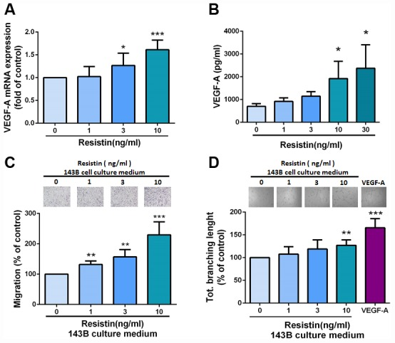 Resistin mediates angiogenesis by inducing increases in VEGF-A expression in osteosarcoma cells. ( A – B ) After incubating osteosarcoma 143B cells with resistin (0–10 ng/ml) for 24 h, VEGF-A expression was measured by qPCR and ELISA. ( C – D ) Osteosarcoma 143B cells were pretreated with resistin (1–10 ng/ml) for 24 h. CM was collected and applied to EPCs for 24 h. Cell migration and capillary-like structure formation in EPCs were examined by Transwell and tube formation assays, respectively. The results were obtained from three independent experiments. * p