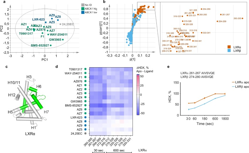 Multivariate analysis reveals structural determinants of high intestine Abca1 induction. a PCA score scatter plot of the first two principal components. Green dots: LXR ligands inducing high intestine Abca1 levels, blue dots: low inducers of ABCA1, and gray dots: compounds with no assigned ABCA1 class. R 2 X(cum) = 83.4%, Q 2 (cum) = 62.9%, n = 17. b S plot of the ABCA1 OPLS-DA and the zoomed-in part of the plot representing limits used for the selection of differential peptides with the highest contribution to class separation (|p(corr)| > 0.7, p > 0.05). Orange dots: LXRα peptides, cyan dots: LXRβ peptides. c Statistically significant ( p -value