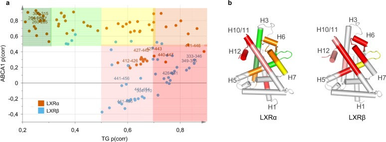 SUS analysis of TG and <t>ABCA1</t> OPLS-DA models identifies potential directions for development of ligands with improved therapeutic profiles. SUS plot ( a ) and the corresponding p(corr) values mapped on the crystal structures of LXRα (2ACL.pdb) and LXRβ (1PQC.pdb) ( b ) according to shared color code. Dark green: p(corr) ABCA1 > 0.5, p(corr) TG