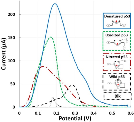 Label-based qualitative detection of different p53 redox products using silver stripping voltammetry. Peaks resulting from protein quantification by the well-known conformationally altered antibody Ab240 are represented.