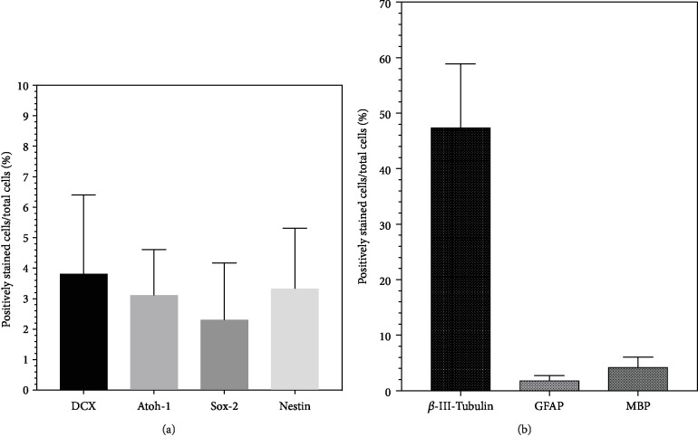 Results of the immunocytochemical analysis of the plated single cells of IC NSC cultures from PND6 rats. The proportions of positively stained cells in relation to the total number of cells on coverslips were evaluated. The boxplots show mean and SEM. (a) Cell proportions that are positive for the analyzed progenitor cell markers after 24 hours on glass coverslips in NSC medium (b) Differentiated cells after 6 days on glass coverslips in DIF medium. Differentiated cell types could be identified morphologically and by immunohistochemical markers of the neuroectodermal lineage. β -III-Tubulin stains cells that differentiate into the neuronal lineage, GFAP stains those that differentiate into the astroglial lineage, and MBP stains those that differentiate into the oligodendrocyte lineage.