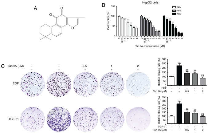 Effects of Tan IIA on the viability and clonogenic potential of HepG2 cells. (A) Chemical structure of Tan IIA. (B) Cell viability analysis of HepG2 cells cultured in the presence of Tan IIA for 24, 48 and 72 h, by MTT assay. (C) Colony formation assay of HepG2 cells that were untreated or treated with 20 ng/ml EGF, 10 ng/ml TGF-β1 and Tan IIA (0.5, 1 and 2 µM) for 2 weeks. *P