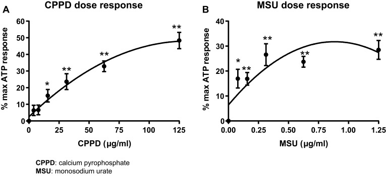 The stone DAMPs CPPD and MSU activate caspase-1 in a dose-dependent manner. Urothelial cells were incubated overnight prior to treatment with either CPPD ( A ) or MSU ( B ) for 24 hrs. Additional wells were treated with 1.25 mM ATP for 1 hr to indicate maximal caspase-1 activation and DAMP-treated wells were normalized to these ATP-treated wells. n=9 for all doses of CPPD and MSU. *p
