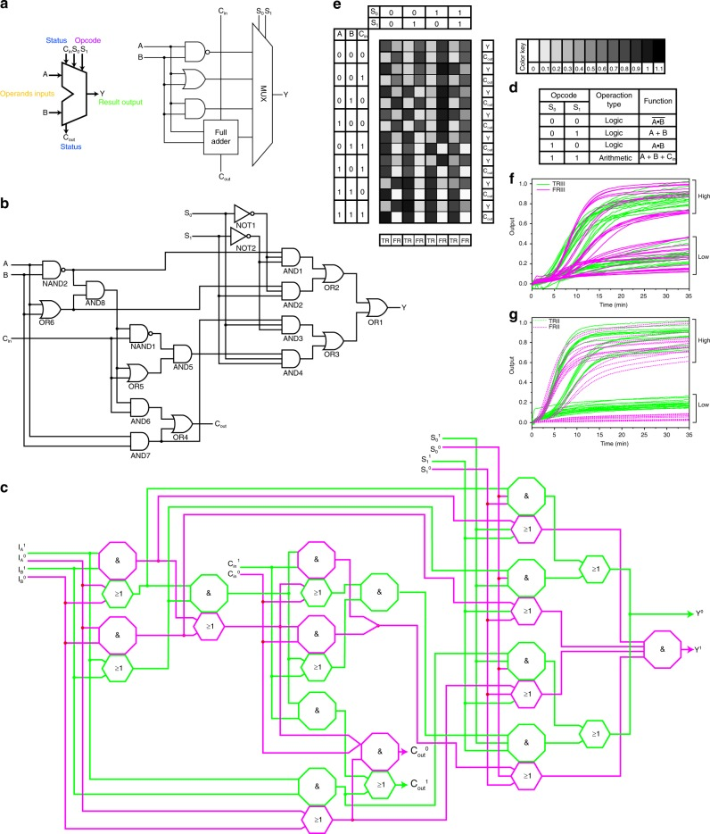 Construction of DNA ALU with our DNA logic gates. a Abstract diagram of a typical ALU. b A typical construction of a 1-bit ALU with a digital logic circuit. A and B: inputs; C in : carry in; S 0 and S 1 : select signals; Y: output; C out : carry out. c Assembling the 4:1 multiplexer with DNA components. The sequences of the strands are listed in the Supplementary Table 2 . The details of the integrated logic gates are shown in Fig. S20. d Function table of the DNA ALU. e Summary of the outputs of the ALU. f , g Reaction kinetics of the ALU with all possible combinations of inputs. The reaction was performed with 12 U Bst polymerase (large fragment), TRIII, FRIII, TRII, and FRII. The curve was plotted by transferring the cycle values into the reaction time. The outputs were normalized to the RFU values in the FAM, ROX, HEX, and Cy5 channels with the highest signals. The TRIII (FAM) and FRIII (ROX) signals correspond to the TRUE and FALSE returns of Y, respectively. The TRII (HEX) and FRII (Cy5) signals correspond to the TRUE and FALSE returns of C out, respectively. The reaction kinetics of the individual gates can be seen in Supplementary Fig. 22 . The sequences of the DNA strands are listed in the Supplementary Table 2 .
