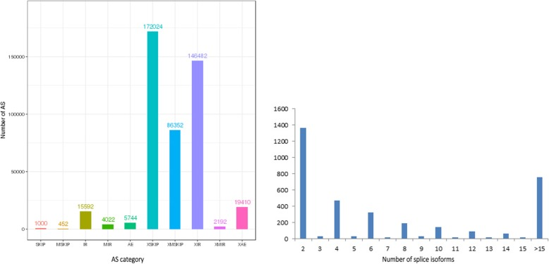 Identification of AS events. a The number distribution of AS events in loci detected by the <t>PacBio</t> Sequel platform. b Distribution of loci that produce two or more splice <t>isoforms</t> detected by the PacBio Sequel platform