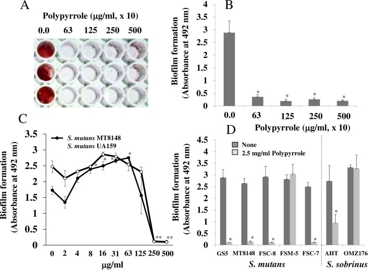 The inhibitory effects of polypyrrole on the biofilm formation of S . mutans . Effects of various concentrations of polypyrrole on the biofilm formation of S . mutans UA159 were observed on human saliva–coated <t>96-well</t> <t>microtiter</t> plates after incubation for 16 h in TSB supplemented with 0.25% sucrose. A: Biofilm formation in S . mutans was present at high concentrations of polypyrrole (63, 125, 250 and 500 x 10 μg/ml) on human saliva–coated 96-well microtiter plates. B: Biofilm formation in S . mutans UA159 was quantitatively analyzed at high concentrations of polypyrrole. C: Biofilm formation in S . mutans UA159 and MT8148 was quantitatively analyzed at various concentrations of polypyrrole. D: Biofilm formation in the S . mutans strains GS-5 and MT8148, clinical isolates FSC-8, FSM-5, and FSC-7, and S . sobrinus AHT and OMZ176 were quantitatively analyzed at 2.5 mg/ml polypyrrole. The data indicated the mean ± SD of triplicate experiments. The independent experiments were performed 3 times, with similar results obtained in each. The asterisks indicated a significant difference between 2 groups (*: p