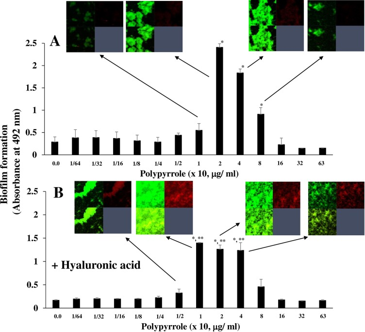 The effects of hyaluronic acid on polypyrrole-dependent biofilm formation. The effects of hyaluronic acid on the polypyrrole-dependent biofilm formation of S . mutans were observed. A: Biofilm formation by gtfBC mutant was quantitatively assessed in various concentrations of polypyrrole on human saliva-coated 96-well microtiter plates in TSB supplemented with 0.25% sucrose and various concentrations of polypyrrole. B: Polypyrrole was preincubated with hyaluronic acid and applied in the biofilm formation assay with gtfBC mutant. The data indicated the mean ± SD of triplicate experiments. The independent experiments were performed 3 times, with similar results obtained in each. The asterisks indicated a statistically significant difference among multiple groups (ANOVA with Bonferroni correction; * p-values