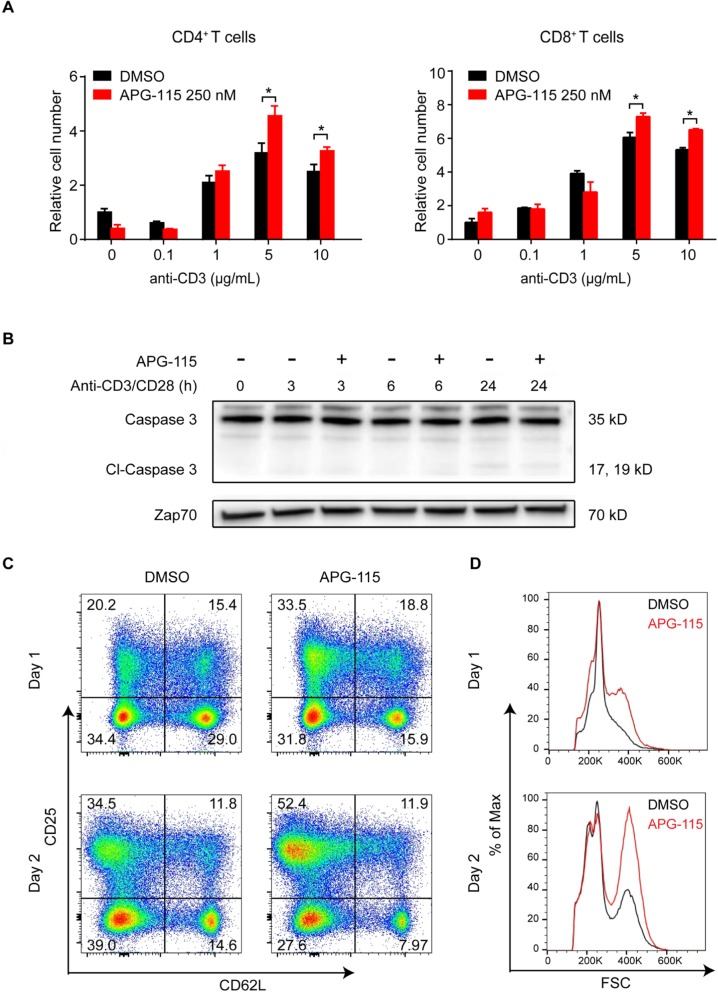 APG-115 increase mouse T cell proliferation and enhances mouse CD4 + T cell activation. a CD4 + T and CD8 + T cells were positively selected from mouse spleens using magnetic beads and then stimulated with indicated concentrations of plate-bound anti-CD3 and 2 μg/mL anti-CD28 in the presence of 250 nM APG-115 or DMSO. After 72 h, relative cell numbers were determined using CellTiter-Glo luminescent cell viability assay (Promega) and normalized to unstimulated cultures treated with DMSO control. * P