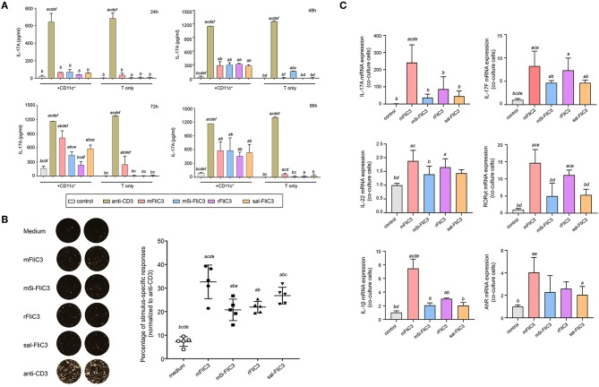 Cytokine IL-17A Production by Small Intestinal Lamina Propria Cells after stimulated ex vivo with SFB flagellins and other antigens. (A) Activation of SILP CD4+ T cells by SFB-mFliC3, SFB-rFliC3, SFB-m5i-FliC3, sal-FliC3, anti-CD3, or PBS. IL-17A ELISA assay was evaluated after 24, 48, 72, and 96 h. (a–f) Represent statistical significance relative to the control group; anti-CD3 group; mFliC3 group; m5i-FliC3 group; rFliC3 group; sal-FliC3 group, respectively. (B) IL-17A ELISPOT assay of SILP CD4+ T cells from WT mice treated with SFB flagellins and other antigens. (Left) Representative ELISPOT images. (Right) Compilation of results from multiple animals. Each symbol represents cells from a separate animal. (C) The mRNA expression of IL-17A, IL-17F, IL-22, RORγt, AhR, and IL-1β relative to Gapdh in a co-culture system stimulated with SFB flagellins. Data are expressed as the mean ± SEM of three independent experiments. Error bars indicate median values. (a–e) Represent statistical significance relative to the control group; mFliC3 group; m5i-FliC3 group; rFliC3 group; sal-FliC3 group, respectively.