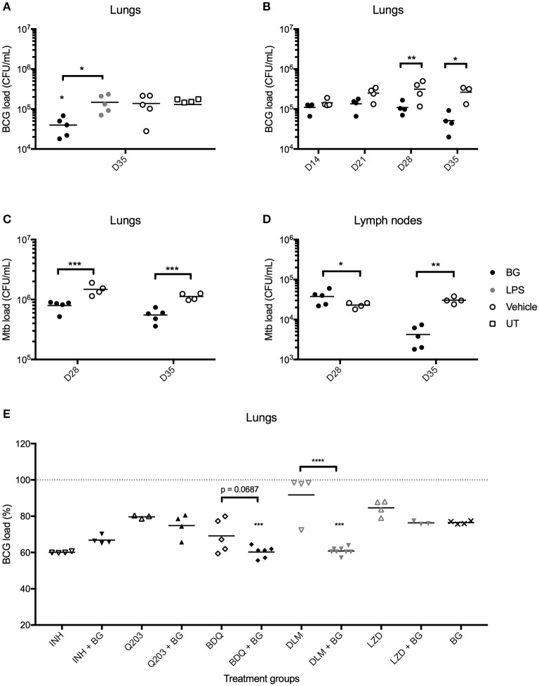 Effect of BG treatment on lung bacterial loads in M. bovis BCG- and Mtb-infected mice. Adult female C57BL/6 mice were infected intratracheally (IT) with 10 6 CFU of M. bovis BCG (A,B,E) or 10 3 CFU Mtb H37Rv (C,D) . Treatment was administered as described in the legend of Figure 6 . For BG adjunct therapy, infected mice were treated daily with INH (0.05 mg/mL) or thrice weekly with Q203 (10 mg/kg) BDQ (15 mg/kg), DLM (10 mg/kg) or LZD (50 mg/kg) via the oral route, in combination with IT administration of BG as described in the legend of Figure 6 . Organs were harvested at day 35 p.i., unless otherwise indicated, and homogenates were plated for CFU enumeration. Data points are shown for each mouse ( n = 3–8 mice/group) and M. bovis BCG load (E) is expressed as a percentage of vehicle control. Significance values were derived using 1-way (E) or 2-way (A–D) ANOVA with Holm-Sidak's multiple comparisons test (* p