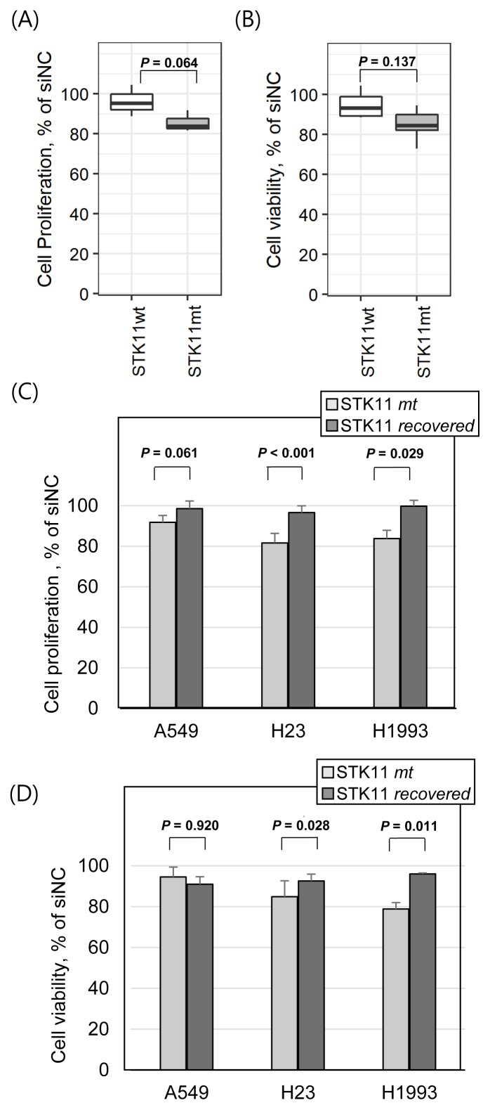 STK11 mutation-dependent anticancer efficacy of <t>ENO3</t> gene knockdown Average variation in cell proliferation (A) and cell viability (B) of STK11 wild-type cell lines (H322M, HCC827, and H1975) and mutant cell lines (A549, H23, and H1993) by the ENO3 gene knockdown using siRNAs. Comparative changes in cell proliferation (C) and cell viability (D) in STK11 -mutant parental cells and STK11 recovered cells by the ENO3 gene knockdown. Cell proliferation was measured based on the direct cell count in the well. Cell viability was measured using CellTiter Blue assay (see the Materials and Methods section for detail). All y-axes represent percentage of cell proliferation or cell viability divided by an average of negative control. Student's one-tailed t -test was used to test statistical significance. Error bars indicate SD.