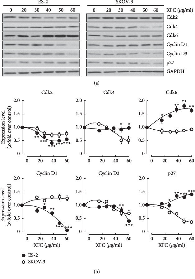 XFC extract inhibits CDK4 and cyclin D3 in SKOV-3 ovarian cancer cells. Human ovarian clear cell carcinoma (ES-2) and human ovarian adenocarcinoma (SKOV-3) cells were cultured as described in Section 2 . Treatment with various concentrations of XFC was performed in serum-free media for 24 hours. Cell lysates were harvested and then processed for (a) SDS-PAGE and western blotting in order to assess the expression levels of Cdk2, CDk4, Cdk6, Cyclin D1, Cyclin D3, <t>p27,</t> and GAPDH. (b) Levels of expression were quantified using scanning densitometry.