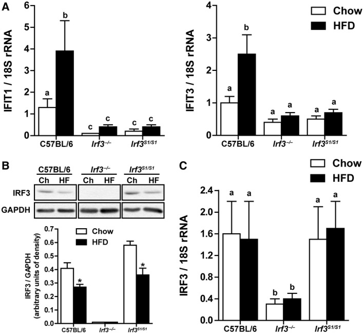 Hepatic IRF3 activation after HFD feeding. Male C57BL/6, Irf3 −/− , and Irf3 S1/S1 mice were fed an HFD or chow for 12 weeks. (A) Expression of IFIT1 and IFIT3 mRNA was analyzed by qRT‐PCR. Values were normalized to 18S and are shown as fold increase over the chow‐fed C57BL/6 control group, n = 12 per genotype. (B) Expression of IRF3 was assessed by western blot and normalized to GAPDH, n = 4 per genotype. (C) Expression of IRF3 mRNA was analyzed by qRT‐PCR. Values were normalized to 18S and are shown as fold increase over the chow‐fed C57BL/6 control group, n = 12 per genotype. Values represent means ± SEM. Values with different alphabetical superscripts are significantly different, P