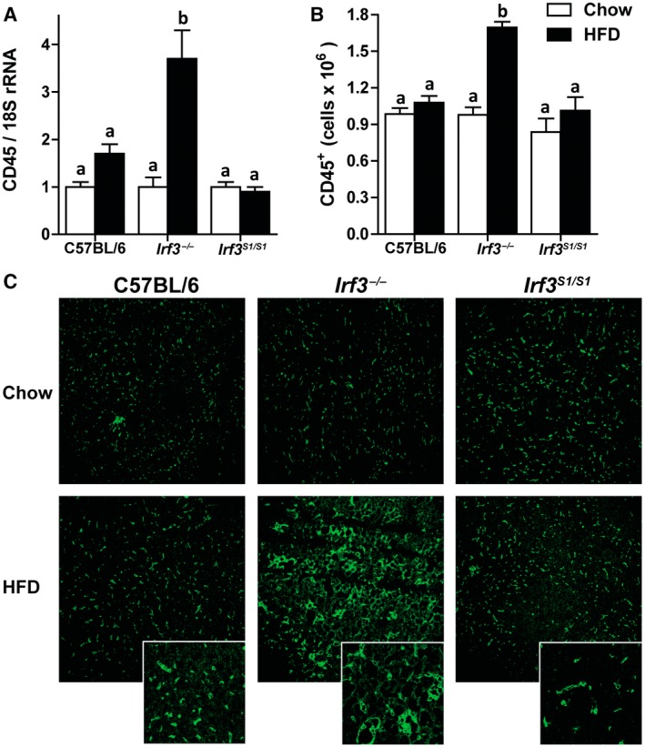 HFD enhanced CD45 + infiltration in Irf3 −/− but not in wild‐type and Irf3 S1/S1 livers. Male C57BL/6, Irf3 −/− , and Irf3 S1/S1 mice were fed an HFD or chow for 12 weeks. (A) Expression of CD45 mRNA was analyzed by qRT‐PCR. Values were normalized to 18S and are shown as fold increase over the chow‐fed C57BL/6 control group, n = 8 per genotype. (B) Hepatic CD45 + leukocytes were gated in isolated liver NPCs by flow cytometry, and total number of cells were quantified in isolated liver NPCs, n = 4 per genotype. (C) Paraffin‐embedded liver sections were stained for CD45. Images were acquired using a 20× objective, n = 4 per genotype. Values represent means ± SEM. Values with different alphabetical superscripts are significantly different, P