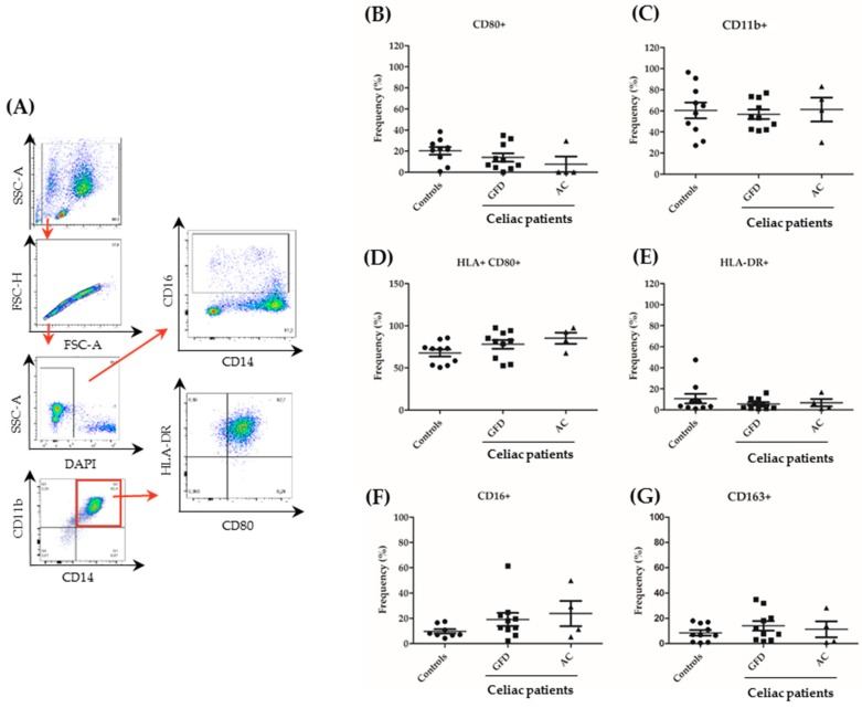 Expression of surface markers in peripheral monocytes from celiac patients. PBMCs were isolated from 10 controls, 10 GFD and 4 active CeD (AC) patients and sorted for CD14. Subsequently, cells were cultured in the presence of granulocyte macrophage colony stimulating factor (GM-CSF; 10 ng/ml) for 24 h and evaluated by flow cytometry. ( A ) Gating strategy used to determine surface marker expression. The stepwise gating approach is highlighted by various steps of analysis that are interconnected by red arrows. Representative plots from a healthy control are shown. ( B – G ) Results for the expression of single surface markers are shown. Each dot represents the surface marker expression result of a single patient. Mean values ± standard error of the mean (SEM) are shown. The Mann–Whitney U test revealed no significant differences.