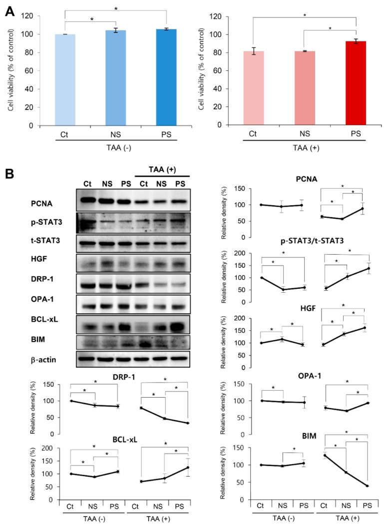 In vitro validation of the effects of the peroxisome proliferator activated receptor λ coactivator 1α (PGC-secretome) on cell viability and expression of various markers. ( A ) Effects of each secretome on the viability of AML12 hepatocytes. Cell viability analysis revealed that the PGC-secretome increased the viability of thioacetamide (TAA)-treated AML12 hepatocytes significantly more than did the control and normal secretome. ( B ) Western blot analysis demonstrating the effects of each secretome on the expression of various markers in AML12 hepatocytes. The markers included those for liver proliferation (p-STAT3, t-STAT3, VEGF, and HGF), mitochondrial fusion (OPA-1), mitochondrial fission (DRP-1), pro-apoptosis (BIM), and anti-apoptosis (Bcl-xL). PGC-secretome significantly increased the expression of markers related to proliferation, mitochondrial fusion, and anti-apoptosis, and significantly decreased the expression of the markers related to mitochondrial fission and pro-apoptosis. Values are presented as mean ± standard deviation of three independent experiments; * p
