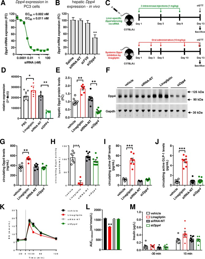 Liver-specific dpp4 silencing does not improve glucose metabolism. ( A ) Dose-response curve upon transfection of PC3 cells with siRNA (n = 3). ( B ) Pilot mouse study to evaluate the siRNA efficacy. Wild-type C57BL/6J mice were injected three-times with dpp4 siRNA (siDpp4, 1 mg/kg), negative control siRNA (luciferase; siRNA-NT) or factor VII siRNA (siFVII) and dpp4 mRNA expression in the liver was analyzed by RT-PCR 7 days after treatment (n = 3; **p