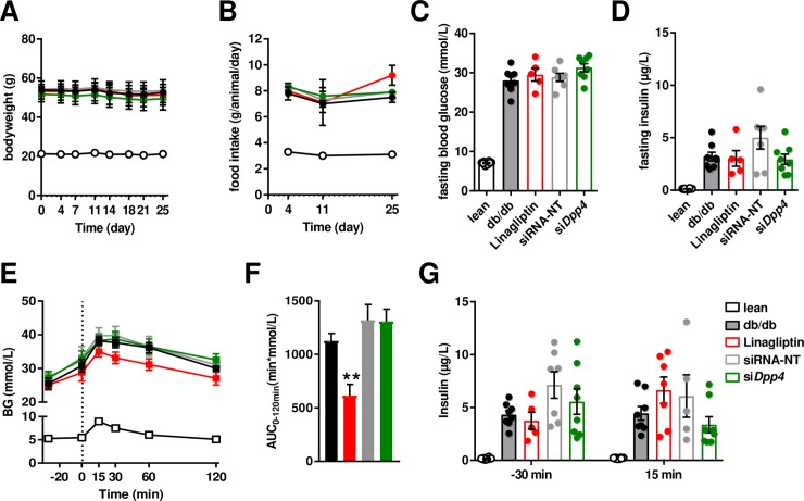 : Liver-specific dpp4 silencing does not improve whole-body glucose metabolism. ( A ) Body weight and ( B ) food intake was measured during the study. ( C ) Fasting blood glucose and ( D ) fasting insulin was measured after study termination. ( E ) Oral glucose tolerance test was preformed 7 days after the 5th injection on day 28. ( F ) Baseline-corrected area under the curve during the oral glucose tolerance test. ( G ) Insulin concentrations before (-30 min) and after the oral glucose load (15 min).
