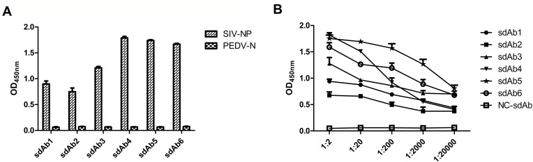 Evaluation of specificity and reactivity of six representative sdAbs against SIV-NP. Notes: ( A ) The <t>sdAb</t> of one representative member of each family extracted from IPTG-induced E. coli TG1 colonies was checked for their specific binding to the immobilized SIV-NP using an indirect <t>ELISA.</t> PEDV-N was used as an irrelevant protein control. ( B ) The reactivity of six representative sdAbs against SIV-NP was detected by indirect ELISA. Abbreviations: sdAb, single-domain antibody; IPTG, isopropyl-β-D-thiogalactopyranoside; SIV, swine influenza virus; NP, nucleoprotein; PEDV, porcine epidemic diarrhea virus; N, nucleocapsid.