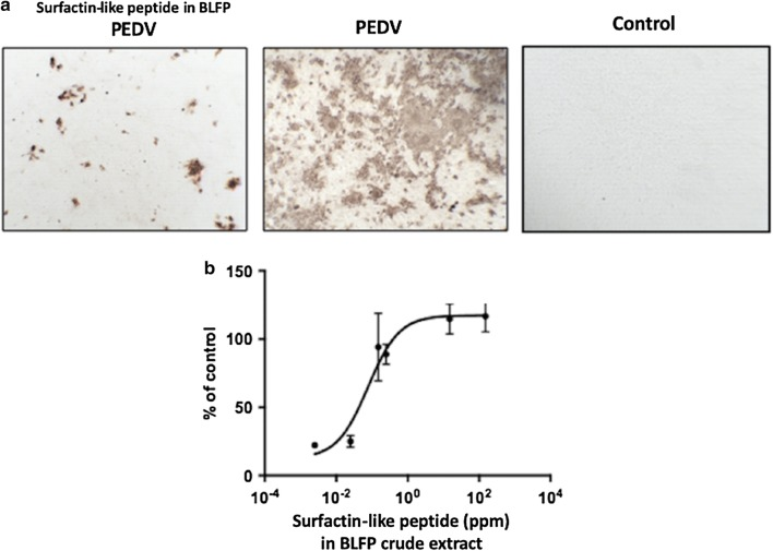 Antiviral activity of crude extract derived from Bacillus licheniformis (BLFP) against PEDV infection, as well as the IC 50 , was determined using the AlamarBlue™ assay. a PEDV-infected Vero cells treated with (left) and without (middle) 150 ppm BLFP crude extract. The right panel shows Vero cells without any treatment. Brown coloration indicates a positive PEDV S protein signal located in the cytoplasm of PEDV-infected cells. b Dose-dependent effect of BLFP crude extract against PEDV. The half-maximal inhibitory concentration (IC 50 ) of BLFP crude extract against PEDV in Vero cells is 0.07 ± 0.45 ppm. Data are presented as the mean ± SD out of three test replicates