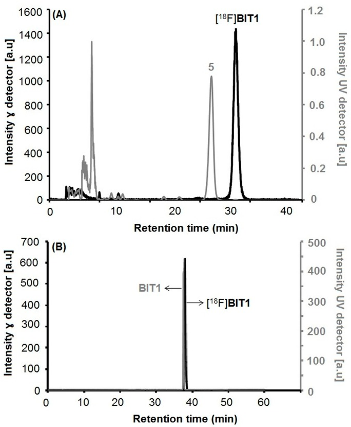 ( A ) Semi-preparative radio- and UV-HPLC chromatograms of [ 18 F] BIT1 (conditions: Reprosil-Pur C18-AQ, 250 × 10 mm, 46% MeCN/20 mM NH 4 OAc aq ., 5.5 mL/min); ( B ) Analytical radio- and UV-HPLC chromatograms of the final product of [ 18 F] BIT1 spiked with the non-radioactive reference BIT1 (conditions: Reprosil-Pur C18-AQ, 250 × 4.6 mm, gradient system with eluent mixture of MeCN/20 mM NH 4 OAc aq ., 1.0 mL/min).