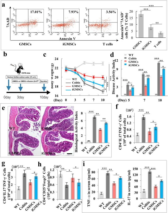 The immunomodulatory properties of iGMSCs are impaired. a In vitro co-culture system showed a significantly decreased capacity of iGMSCs to induce Annexin V + /7AAD + T cell apoptosis when compared with the GMSC group. b Schema showing iGMSC and GMSC transplantation for treating dextran sodium sulfate (DSS)-induced experimental colitis mice. c – e iGMSCs showed impaired immunomodulation capacity compared with GMSCs, as assessed by c amelioration of losing body weight, d decreased disease activity index (DAI), and e alleviation of colitis histologic activity index (HAI). f – h FACS analysis showed that the levels of Th1 and Th17 were significantly elevated while the levels of Tregs were significantly reduced in colitis mice compared with the control mice. iGMSC infusion exhibited compromised reduction of Th1 and Th17 cells and upregulation of Treg levels in colitis in mice than did GMSCs. i ELISA analysis showed that the levels of tumor necrosis factor α (TNF-α) and IL-17 in serum were markedly increased in colitis mice compared with the control mice at 10 days post-DSS induction. iGMSC infusion exhibited compromised ability to downregulate serum levels of TNF-α and IL-17 compared with GMSCs. n = 5 in each group. Scale bar = 200 μm. * P