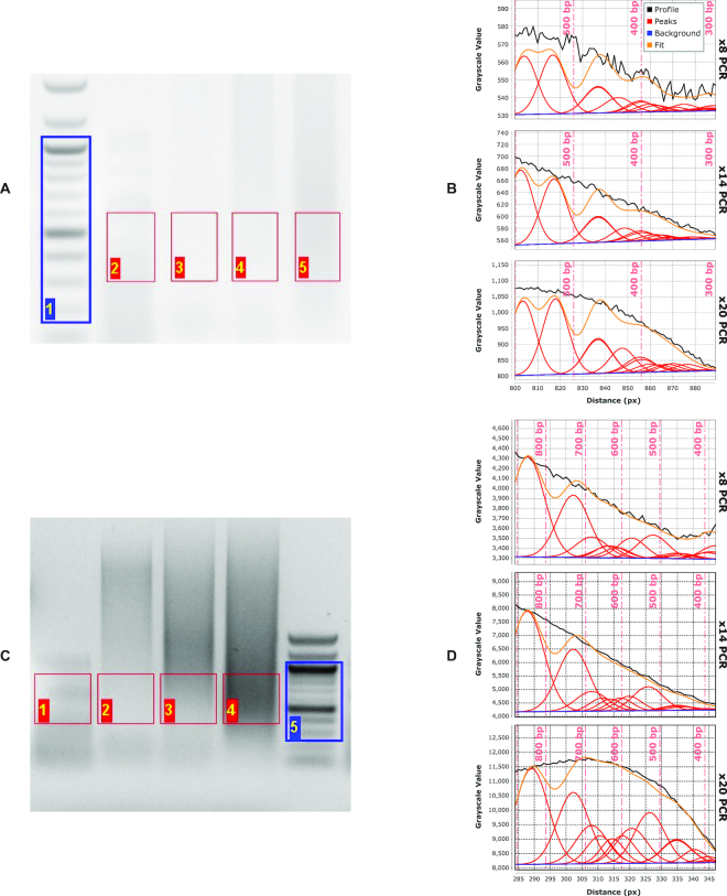 Agarose-gel analysis of tagmentation products of phage-λ DNA analyzed on ( A ) high-resolution and ( C ) low-resolution (i.e. mini) agarose gels. Size-distribution fits for the high-resolution gel ( B ) and mini gel ( D ) of the same tagmented <t>λ-DNA</t> sample subjected to increasing numbers of PCR-amplification cycles (lanes 3–5 in (A), lanes 2–4 in (C)): 8 cycles (top plots), 14 cycles (middle plots) and 20 cycles (bottom plots) in both (B) and (D). Vertical dashed lines (light red in (B), (D)) give the positions of maxima in the discrete molecular-weight ladder (blue ROI in (A), (C)).