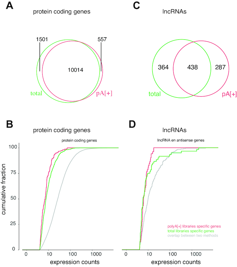While most protein coding genes are commonly detected, lincRNAs appear more method specific. ( A ) Overlap between protein coding genes detected in polyA[+] (1 million reads) and total RNA (1 million reads) libraries. ( B ) Expression counts for protein coding genes detected in only polyA[+] libraries (red), only total RNA libraries (green) or both (gray). ( C ) Overlap between lncRNAs detected in polyA[+] (1 million reads) and total RNA (1 million reads) libraries. ( D ) Expression counts for lncRNAs detected in only polyA[+] libraries (red), only total RNA libraries (green) or both (gray).