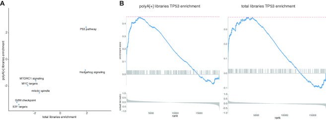Pathway analysis for polyA[+] RNA and total RNA libraries is similar. ( A ) Gene set enrichment analysis for all hallmark pathways resulted in the same significant ( P adj