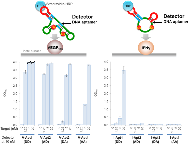 Detection of the target proteins using aptamer variants as the primary detector agents in ELONA. The target was directly immobilized on the plate surface by an incubation with the target solution (100 μl per well) at each indicated concentration, in the presence of 1 μg/ml of BSA in 0.1 M carbonate buffer (pH 9.6), for 2 h. After the incubation, the plate surfaces were further coated with blocking solution (1% BSA in 1× d -PBS(–), 300 μl per well) for 2 h. After the blocking reaction, 100 μl of the detector solution (10 nM each aptamer derivative in 1× binding buffer) was added to each well and then the binding reaction was performed for 30 min. After the incubation, 100 μl of the secondary detector solution (50 ng/ml HRP-conjugated streptavidin in 1× binding buffer) was added to each well, and then incubated for 30 min. After washing the wells, the TMB reaction (100 μl per well) was performed for 5 min (left, VEGF 165 ) or 15 min (right, IFNγ). The sample size is two per each combination set, and the error bars represent one standard deviation. The bars with wavy lines indicate that at least one of the two sample wells showed overflow (OD 450 > 4.000).