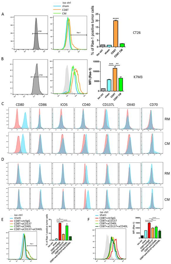 CD8 + T cells engage with tumor cells through TNFRSF to boost NKG2D ligand expression. (A, B) Murine CT26 colon carcinoma (A) and K7M3 osteosarcoma (B) cells were stained with CFSE and co-incubated with sham, activated CD8 + T cells (CD3/CD8 Dynabeads, IL-2 [50 U/mL], and IL-12 [10 ng/mL]) at a 1:1 tumor to T cell ratio, or CD8 + T cell–conditioned medium (CM) for 24 h. Rae-1 expression on tumor cells was determined by flow cytometry. Bar graphs show means ± standard error of the mean (SEM). MFI, mean fluorescence intensity. (C, D) CT26 (C) and K7M3 (D) cells were stained with CFSE and cultured in regular medium (RM) or CD8 + T cell CM. Expression of CD80, CD86, ICOSL, CD40, CD137L, OX40, and CD70 was determined by flow cytometry. (E, F) Activated CD8 + T cells were pretreated with control IgG, anti-CD137 (5 ng/mL), anti-CD40L (5 ng/mL), or anti-CD137 plus anti-CD40L for 3 h. CT26 (E) and K7M3 (F) cells were stained with CFSE and co-incubated with sham or pretreated CD8 + T cells for 24 h. Rae-1 expression on tumor cells was determined by flow cytometry. iso ctrl: isotype control. Bar graphs show means ± SEM. Results are representative of three repeated experiments. * P