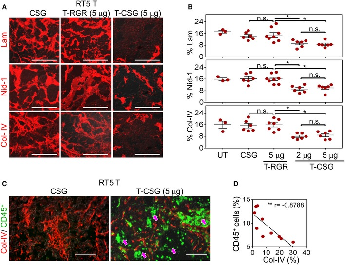 TNFα‐CSG treatment induces specific tumour ECM degradation Staining with indicated antibodies (red) for tissues treated with 5 μg doses of TNFα‐CSG (T‐CSG) or TNFα‐RGR (T‐RGR), or 0.8 μg doses of CSG peptide. Scale bars: 50 μm. Quantitative analysis of ECM staining/field/tumour from panel (A) and mean ± SEM (3–8 tumours from n = 3 mice; * P